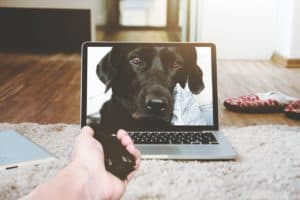 Dog image on laptop reaching out with SEO services